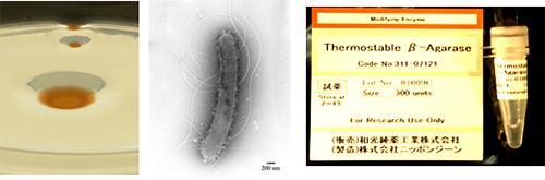耐熱性アガラーゼ生産菌A94株の寒天プレート上での写真(左)、同微生物の電顕写真(中)、耐熱性アガラーゼ製品(右)