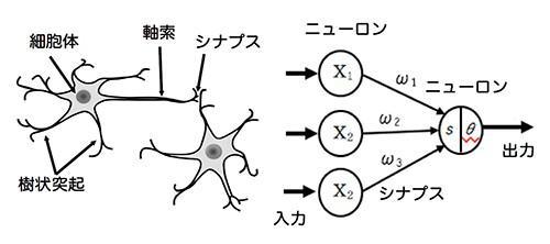 図1 ニューロン(生体神経細胞)とニューラルネットワーク