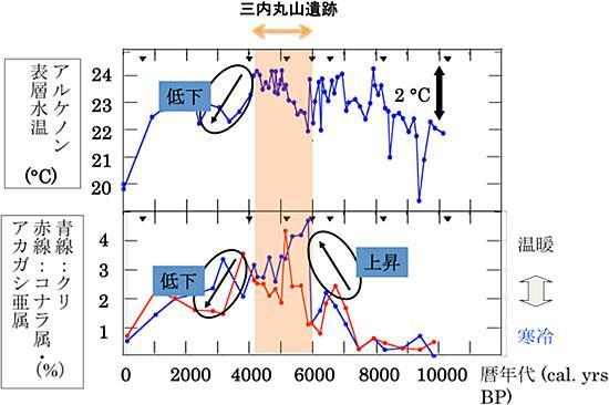 三内丸山遺跡における水温、気温(花粉分布)の変遷