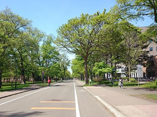 写真1 緑豊かな5月の北海道大学構内