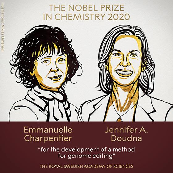 化学受賞者2氏のイラスト。左からエマニュエル・シャルパンティエ氏と、ジェニファー・ダウドナ氏(ノーベル財団提供)(c) Nobel Media. Ill. Niklas Elmehed.