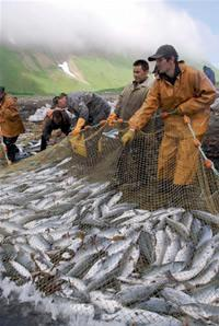 カムチャッカ半島のサケ漁