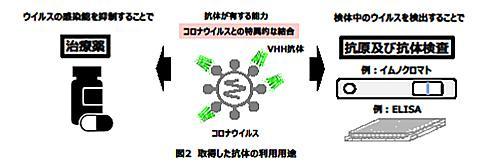 北里大学と花王が開発した人工抗体の応用の概念図(北里大学と花王の研究グループ提供)