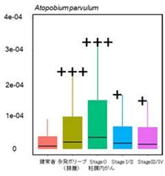 発がんの早期に増加し、がんの進行と供に減少する腸内細菌の例(細菌名・アトポビウム・パルブルム)(提供・大阪大学と国立がん研究センターの研究グループ)