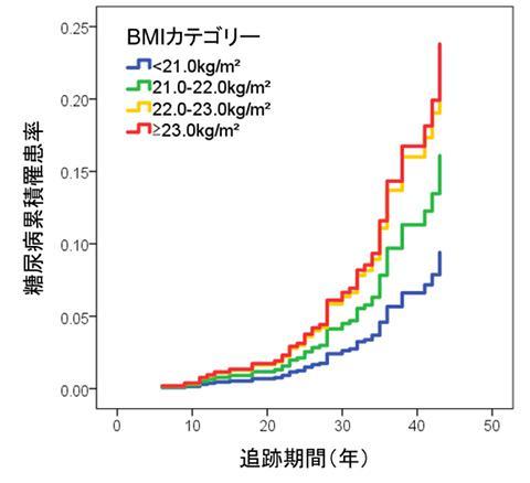 4つのBMIカテゴリーごとの糖尿病累積罹患率(発症率)(提供・順天堂大学/順天堂大学研究グループ)