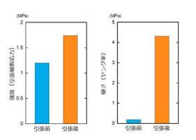 モノマーを含んだ DN ゲルに力学負荷を加えることで、 その強度(左 )は 1.5 倍、硬さ(右)は 23 倍に増大する(図の説明と提供は北海道大学の研究グループ)