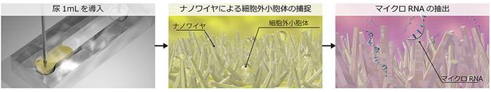 図 ナノワイヤを用いた尿中細胞外小胞体の捕捉とそこに内包されるマイクロRNA(提供・名古屋大学など共同研究グループ)
