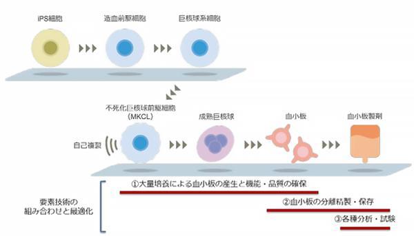図 ヒト iPS 細胞由来血小板製剤の製造フローと要素技術の関係(メガカリオン作成・提供)