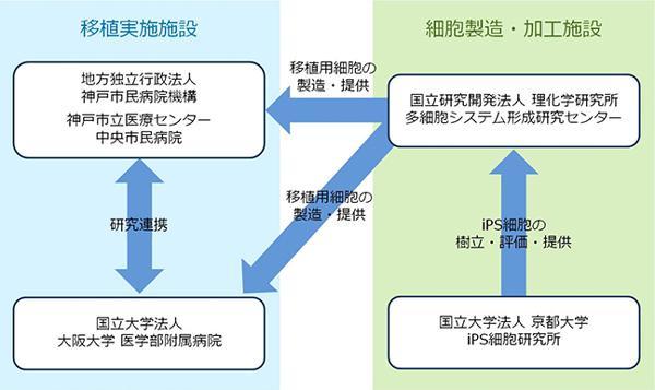 図 他人のiPS細胞を「滲出型加齢黄斑変性」の患者に移植する臨床計画の概要図(理研提供)