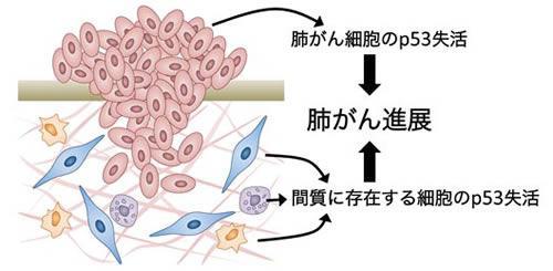 がん抑制因子p53の失活によるがん進展