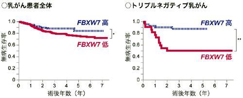 血液細胞のFbxw7量と乳がん患者の無病生存率