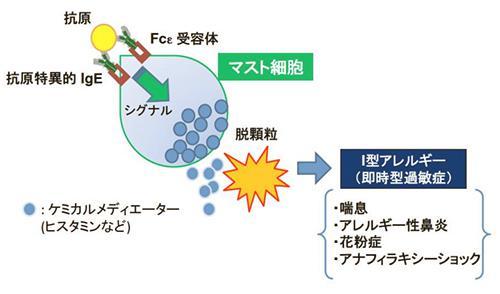 丈夫なハイドロゲル電極の作製方法