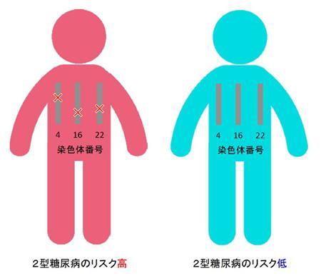 2型糖尿病患者で見つかった3カ所のゲノム構造異常
