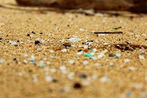 写真 沖縄県石垣島の海岸。色のついた小さなプラスチックごみが見える。(磯辺さん提供)