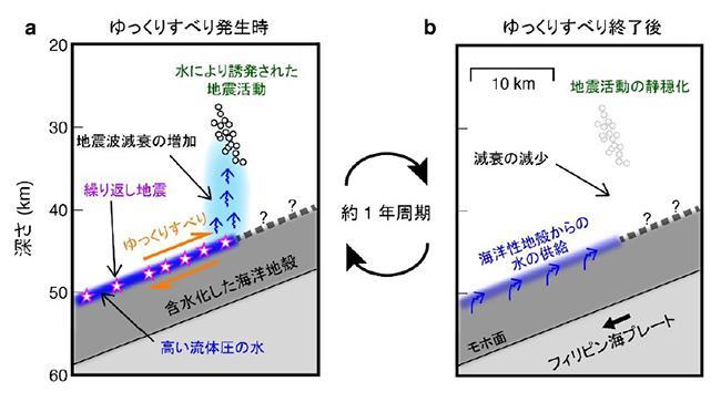 図2 (a)スロースリップ(ゆっくりすべり)が活発なときは繰り返し地震も頻発し、スロースリップで絞り出された水が上昇して、上側の陸のプレート内部で小さな地震をたくさん起こす。(b)スロースリップが不活発なときは水の供給が途絶え、上方の地震もあまり起きない。この場所では、(a)と(b)が約1年の周期で繰り返されることも分かった。