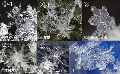 写真 2016年11月24日の降雪で午前8〜9時に送られてきた雪結晶の写真。樹枝状、扇状の形がある。(気象研究所のプレスリリースより)