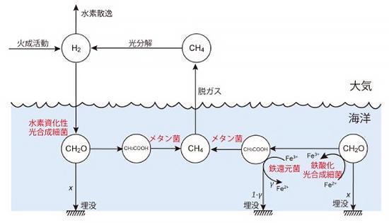 図 光合成をする2種類の細菌による物質の流れ。水素資化性光合成細菌と鉄酸化光合成細菌が海中に共存することで、大気中に温室効果ガスのCH4(メタン)が増える。CH2Oは光合成で作られる栄養分、H2は水素。(尾﨑さんら研究グループ提供)