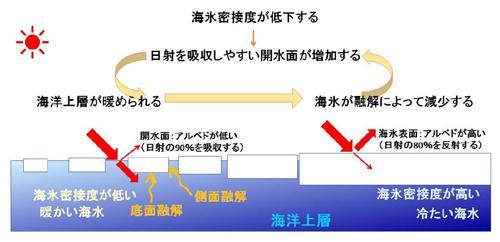 図2 海氷と海面のアルベドの違いによる「正のフィードバック」の概念図。