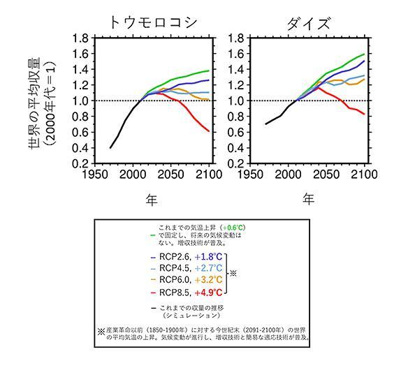 図 主要穀物の世界平均収量予測値の推移 。黒線は収量モデルにより再現した過去50年間(1961-2010年)の世界の平均収量の推移、青〜緑色の線はそれぞれの排出シナリオでの収量予測値の推移で、いずれも2000年代値を基準(1.0)とした相対値。気温上昇はそれぞれの排出シナリオで予測される今世紀末(2091-2100年)の気温上昇。過去の収量の再現値・予測値はいずれも、10年間ごとに平均値を計算し、それをつないだ線グラフとして示している(図説明と図の提供は農研機構など研究グループ)