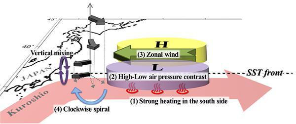 図 ピンクの帯が黒潮。黒潮の上には低気圧(L)が、北側の冷たい海には高気圧(H)ができ、その境目を東から西に風(3)が吹く。黒い矢印は、北から吹いてきた冷たく湿った風。これが「やませ」のもと。高度の低い部分では、東からの風(3)に押されて向きを変え、日本に吹きつける東寄りの風になる(立花さん提供)
