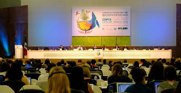 写真1 COP13本会議場で討議・交渉する各国代表ら(2016年12月9日、滝澤美奈子撮影、以下同)