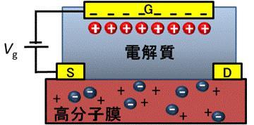 電解質ゲート法による電荷注入の模式図。正負の可動イオンを含む電解質を高分子薄膜上に滴下し、ゲート電圧(Vg)によってイオンを高分子膜内まで駆動し、高分子に電子(正孔)を送り込む。S、D、Gは電極を表す。(名古屋大学提供)