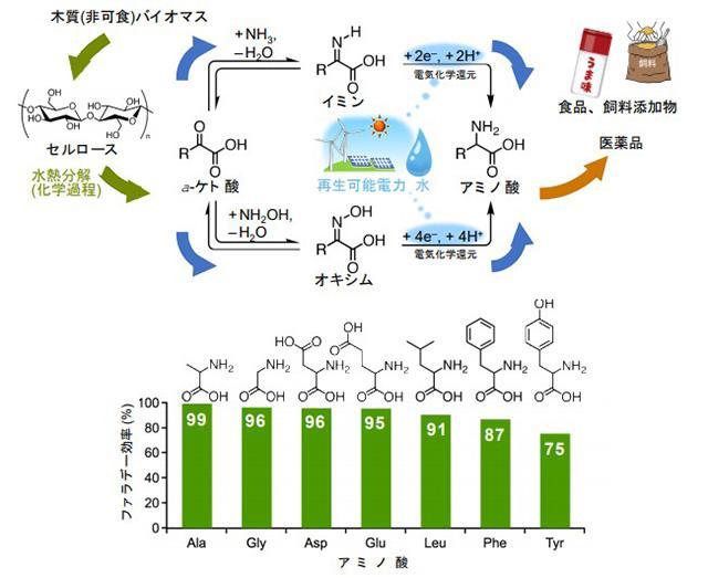 バイオマスと水を原料とするアミノ酸合成のフロー(上)と、電力からアミノ酸への変換効率を表すファラデー効率(下)(九州大学山内研究室提供)