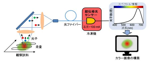 図 産総研が開発した光子顕微鏡の概略図〔提供・産総研〕