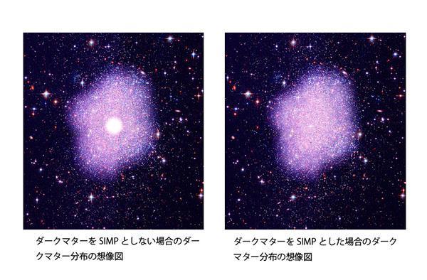 写真.ダークマターを SIMP としない場合はダークマターが銀河の中心部の狭い範囲に極端に集中し、外側では少ない (左) 。一方、ダークマターを SIMP とした場合には銀河の中心部から外側にかけてダークマターがなだらかに分布する (右) 。この場合のダークマターの分布は観測事実と良く合う。 (Original credit: NASA, STScI; Credit: Kavli IPMU - Kavli IPMU modified this figure based on the image credited by NASA, STScI)