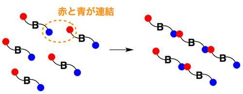 従来の高分子合成法の模式図。小分子Bが持つ赤と青の連結点がつながることで、小分子Bから高分子が合成できる。
