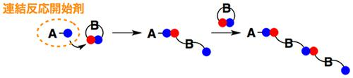 連結反応開始剤を用いた精密高分子合成の模式図。青い連結点だけを持つ小分子A(連結反応開始剤)が環状になった小分子Bの連結点に近づくと、小分子Bは赤い連結点と青い連結点を解き、赤い連結点を小分子Aの青い連結点につないで2量体を形成する。つながる相手がいなくなった小分子Bの青い連結点は、別の小分子Bの赤い連結点とつながり、3量体を形成する。環状分子の数だけこの連結を繰り返す。