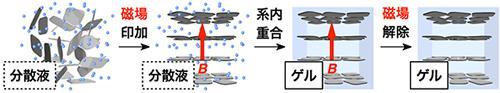 静電反発力により内部から支えられたヒドロゲル材料。磁場をかけてビニルモノマーをラジカル重合することで、ナノシートの水分散液はヒドロゲルへと変換され、互いに平行に配向したナノシートの構造は半永久的に固定される。
