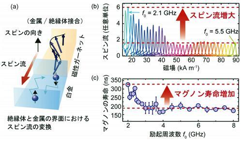 観測されたスピン流の増大現象とマグノンの寿命。(a)測定に用いた磁性ガーネット/白金の接合におけるスピン流の変換の模式図。(b)絶縁体の磁性ガーネットと白金からなる接合におけるスピン流の測定結果。(c)マグノンの寿命の測定結果。(b)のようにスピン流の増大現象が観測された条件で、マグノンの寿命が約200ナノ秒から320ナノ秒に延びていることがわかった。