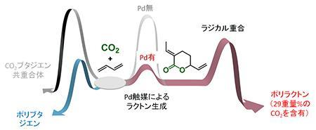 パラジウム触媒で2種類の化学反応を進行させてCO2とブタジエンからポリラクトンを製造する原理