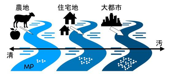 図 川の汚れとマイクロプラスチック(MP)の濃度の概念図。市街化が進み汚れた川ほど、マイクロプラスチックの濃度も高かった。(片岡さんら研究グループ提供)