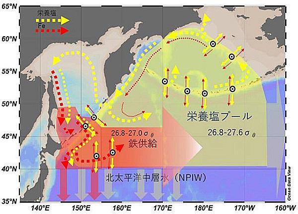 北太平洋の栄養分の循環(北海道大学提供)