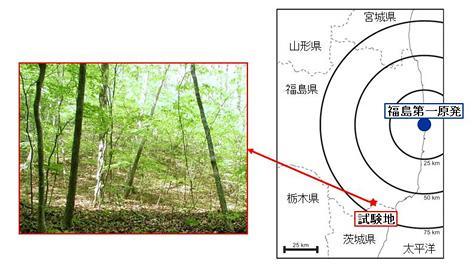 調査を行った茨城県北部の落葉広葉樹林