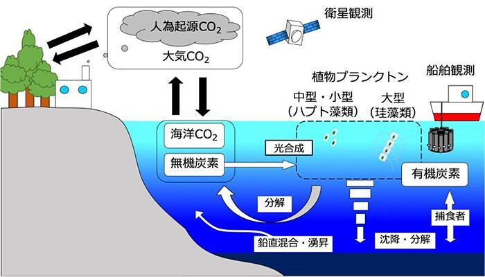 大気から海洋に溶け込んだCO2の行方(国立環境研究所提供)