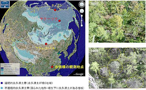 陸域の集中観測地点(左図の●)及びヤクーツク・観測サイトでの2007年、2008年夏の森林の変化