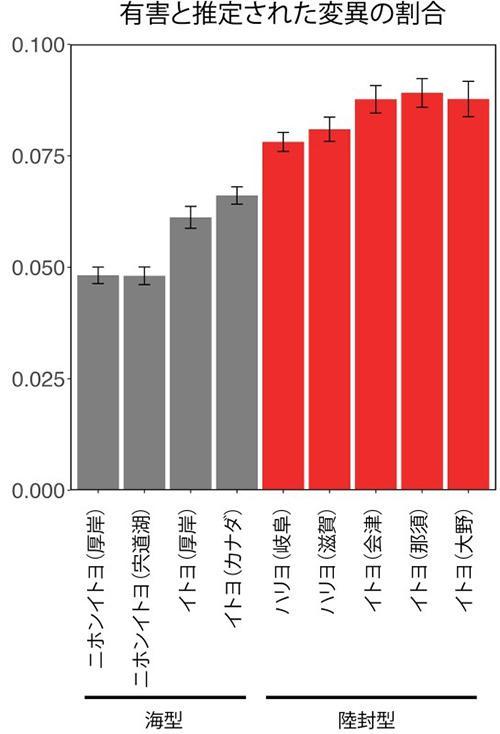内陸の集団は海の集団に比べ、有害と推定される変異が多く見つかった(国立遺伝学研究所提供)