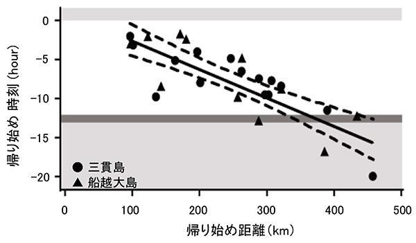岩手県の沿岸に位置する三貫島と船越大島でオオミズナギドリの帰り始めの調査を行った。三貫島でも船越大島でも、島から遠くにいる時ほど帰り始める時間が早いことが分かった。(佐藤克文教授提供 / Shiomi et al. 2012 Animal Behaviour)
