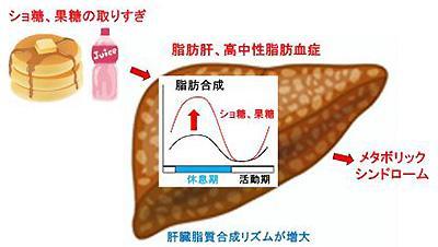 砂糖の取り過ぎがメタボリックシンドロームにつながる関係の概念図(名古屋大学/名古屋大学の研究グループ提供)