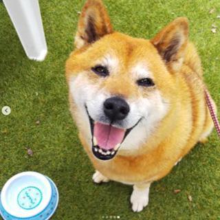 実験に参加した犬(麻布大学獣医学部・菊水教授提供)