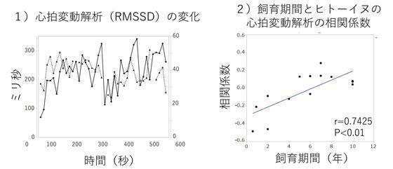研究の結果。左図は、犬(実線)と人間(点線)の心拍変動解析の結果。実験中に同じように変化し、同期化している様子が観察できる。右図は同期化の値(相関係数)と飼育期間の関係。飼育期間が長いほど、同期化することが示された(麻布大学などの研究グループ提供)
