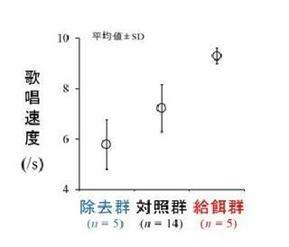 除去群、対照群、給餌群のオスのさえずり(歌唱)速度の差。グラフの縦軸の値が高い方が速い(提供・大阪市立大学などの研究グループ)