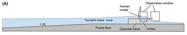 図1 人工津波実験の模式図。赤い人型のマークは実験に使った人形。これをコンクリートブロックの上に寝かせて、図の左側から津波を起こし、側面の窓から観察した。(論文より)