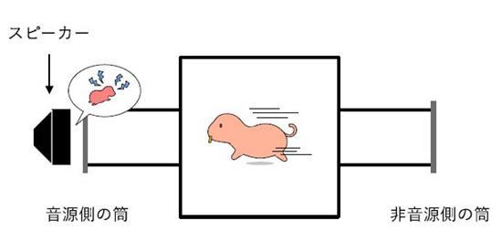 図 実験装置の概念図。子ネズミの声がするスピーカーがある「音源側の筒」と、スピーカーがない「非音源側の筒」のどちらに長い時間いるかを調べた。(度会さんら研究グループ提供)