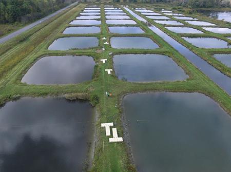 写真1 実験を行った米コーネル大学の池。(写真はいずれも山道さんら研究グループ提供)