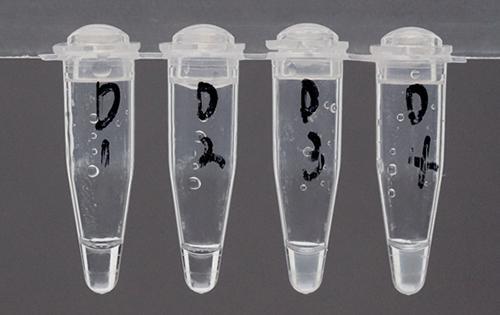 画像1 LAMP法を用いたヒアリDNA検出試験結果。左から1,蒸留水 2,在来アリのDNA抽出液 3,ヒアリのDNA抽出液 4,ヒアリ1個体と在来アリ9個体のDNA抽出液、をそれぞれ混入した際の試験結果。ヒアリのDNAが含まれる3,4のみが白濁することがわかる(提供・国立環境研究所、画像説明・同研究所研究グループ)