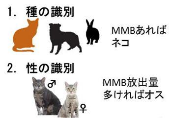 図 ふんが放出するMMBの有無や量による種や性の識別(岩手大学の研究グループ提供)